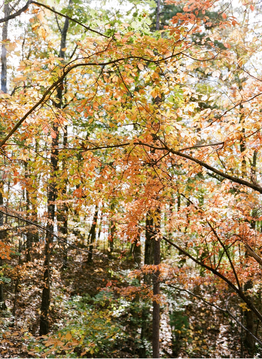Fall-Smoky-Mountains-Film-Photography