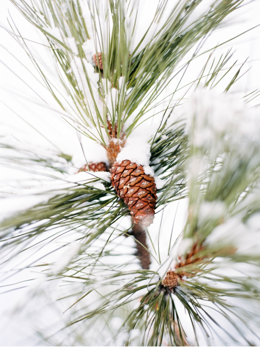 Pinecone-Detail-Winter-Wedding-British-Columbia