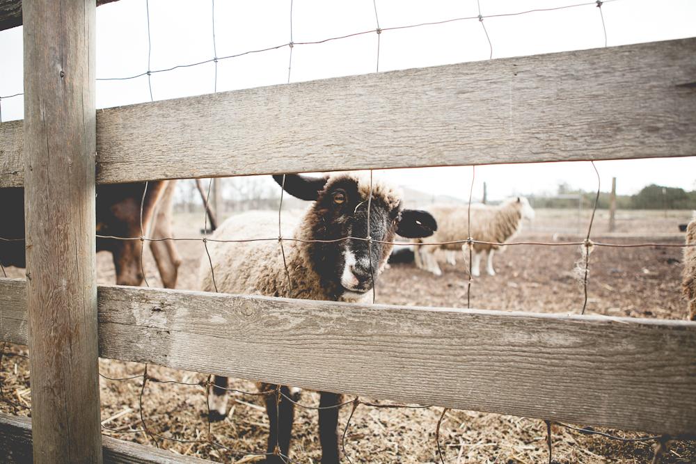 farm-9.jpg