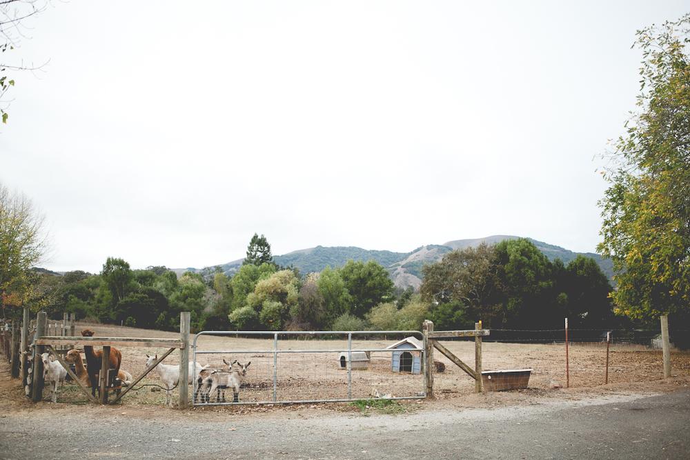 farm-10.jpg