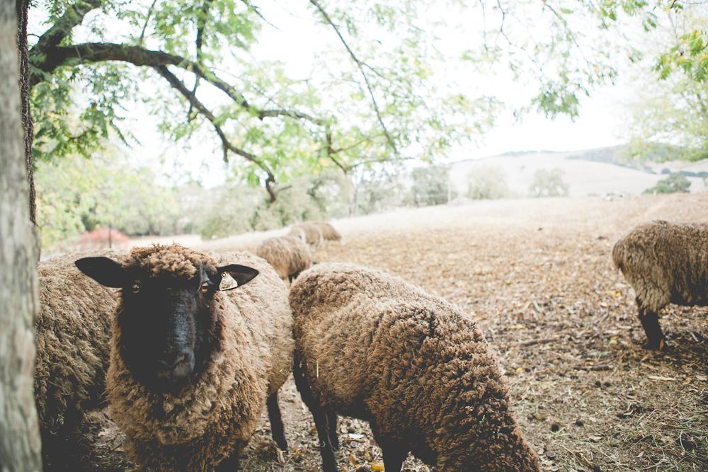 farm-23.jpg