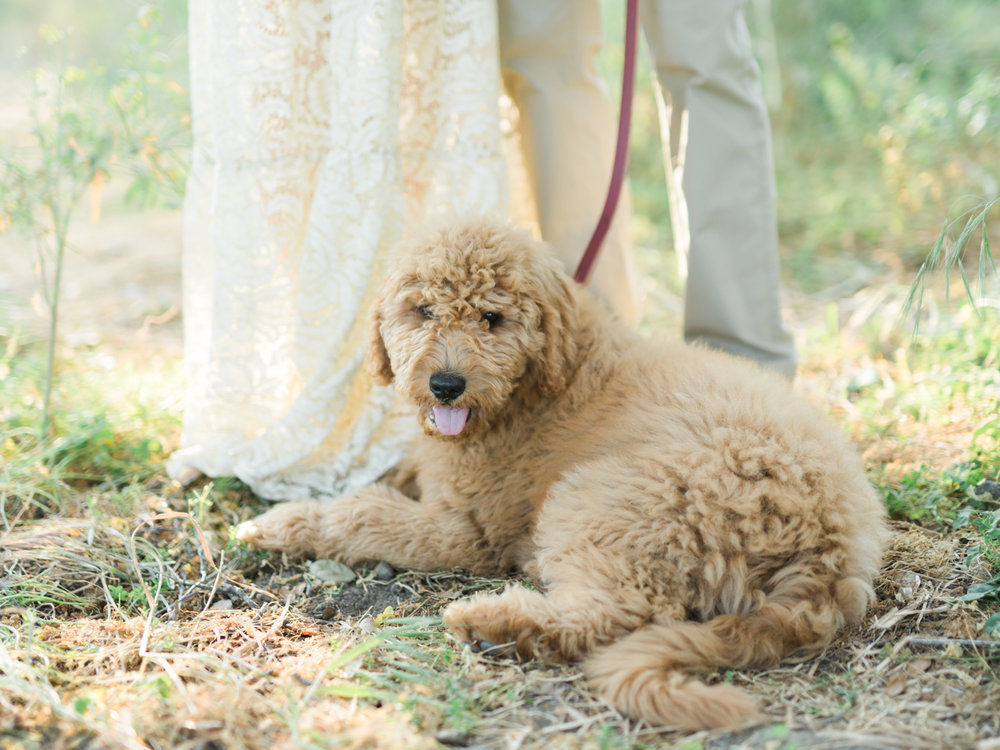 San_Juan_Capistrano_Goldendoodle_family_portrait_session_los_angeles_wedding_photographer-3.jpg