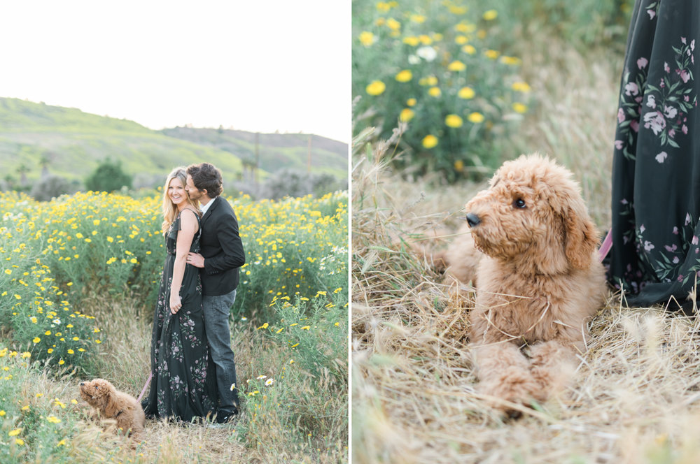 San_Juan_Capistrano_Goldendoodle_family_portrait_session_los_angeles_wedding_photographer-19.jpg