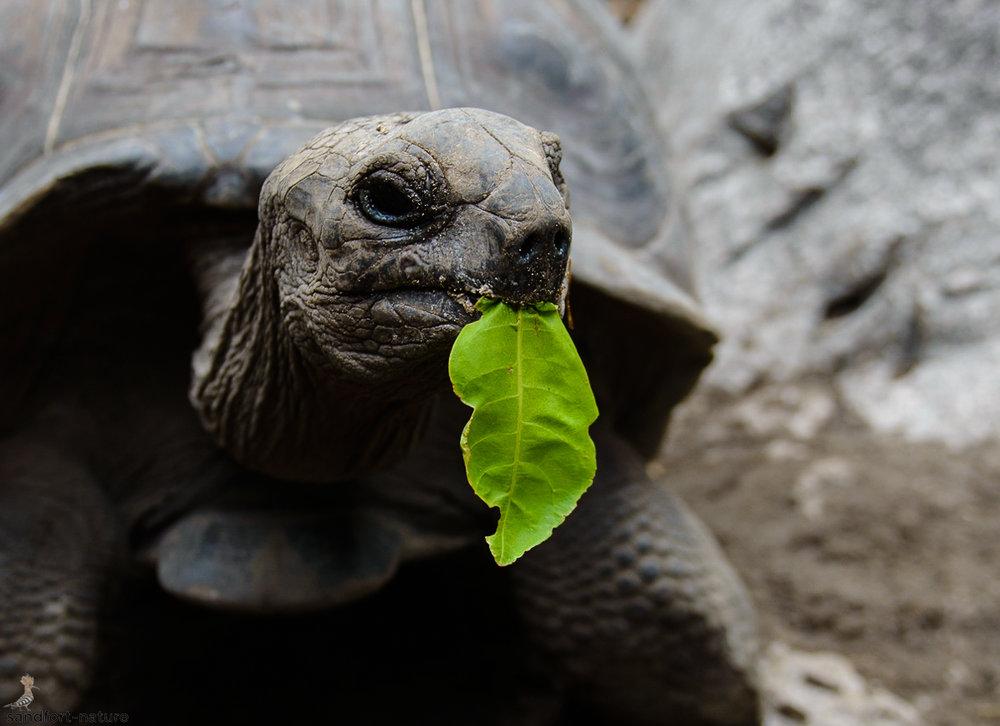 Seychelles-5841-2.jpg