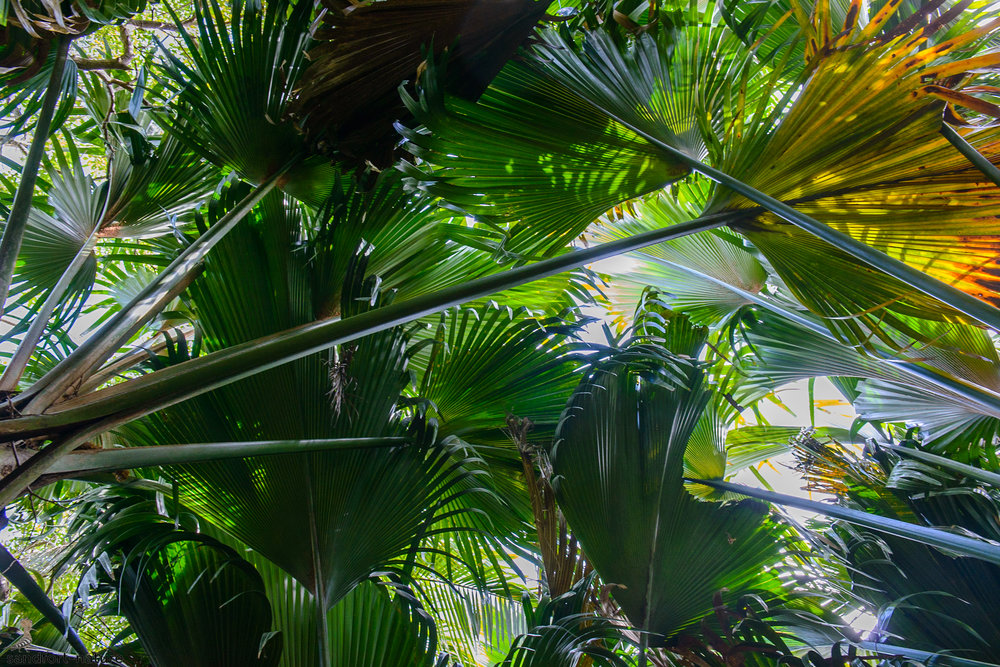 Seychelles-6315.jpg