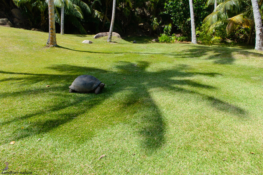 Seychelles-6619.jpg