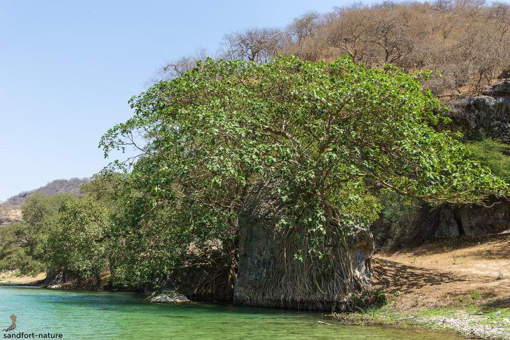 Wadi Darbat | Oman