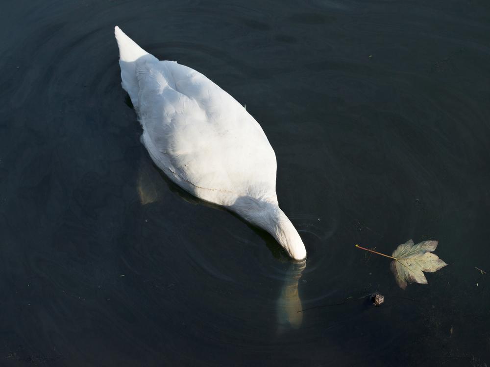 Canal_Freya-Najade-57.jpg