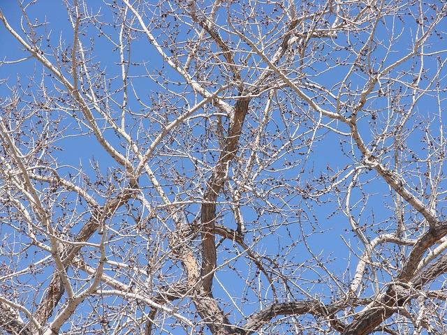 cottonwood-368350_640.jpg