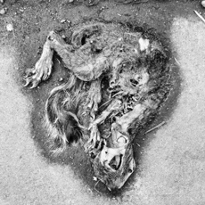 squirrel; 'dead things' series