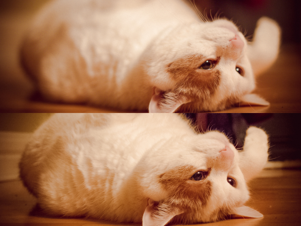 """Top image F 1.4 : My furry fat cat with his """"assets"""" not so revealed  Bottom Image F 10: The whole fat truth revealed!"""