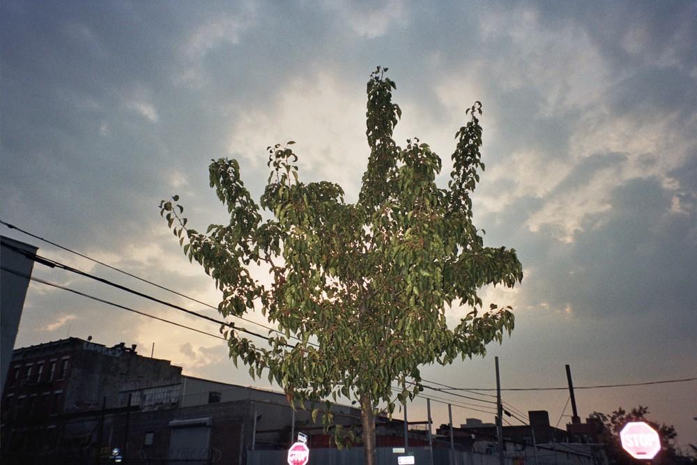 School Tree 2010