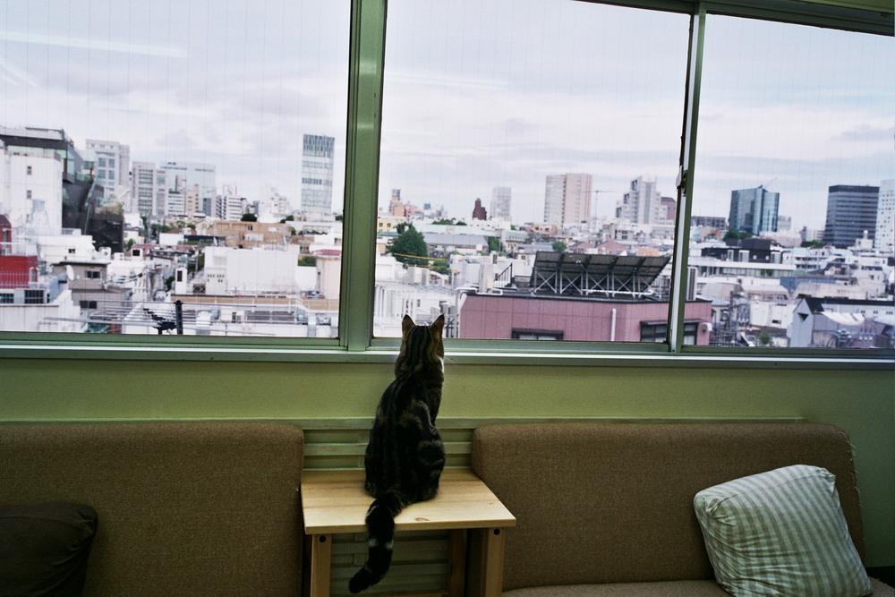 Cat Cafe (Tokyo) 2011