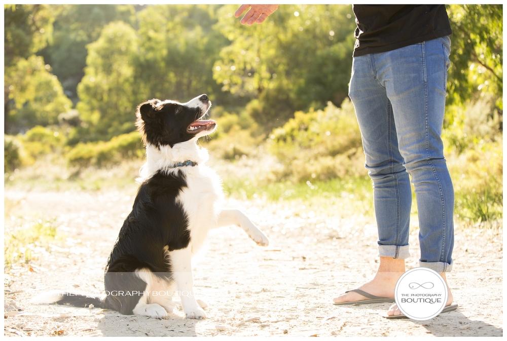 south west pet photographer