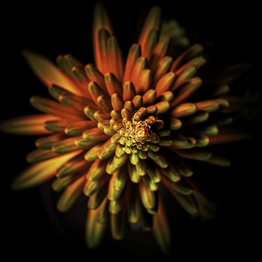 flowers-8744-Edit copy.jpg