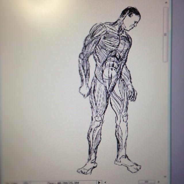 #art #illustration #drawing #anatomy