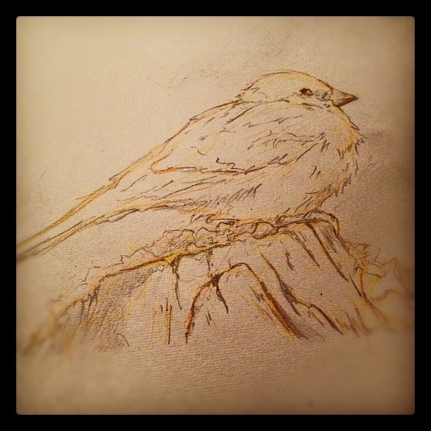 Older #drawing #art #illustration #fat #bird #sparrow #obesity (Taken with  instagram )