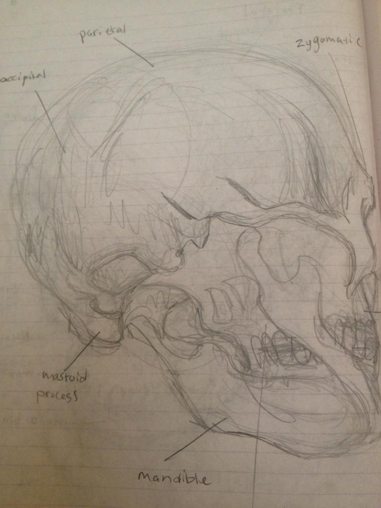 Rear skull
