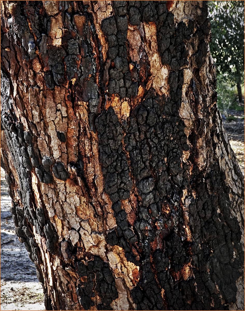 TreeMostlyBlack-01-1200y-c10.jpg