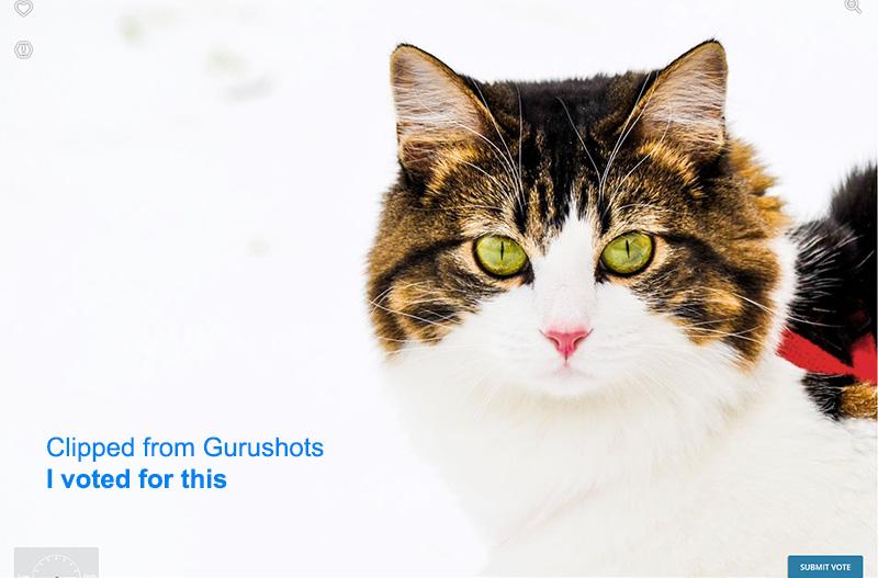 ExampleFromGurushots02.jpg