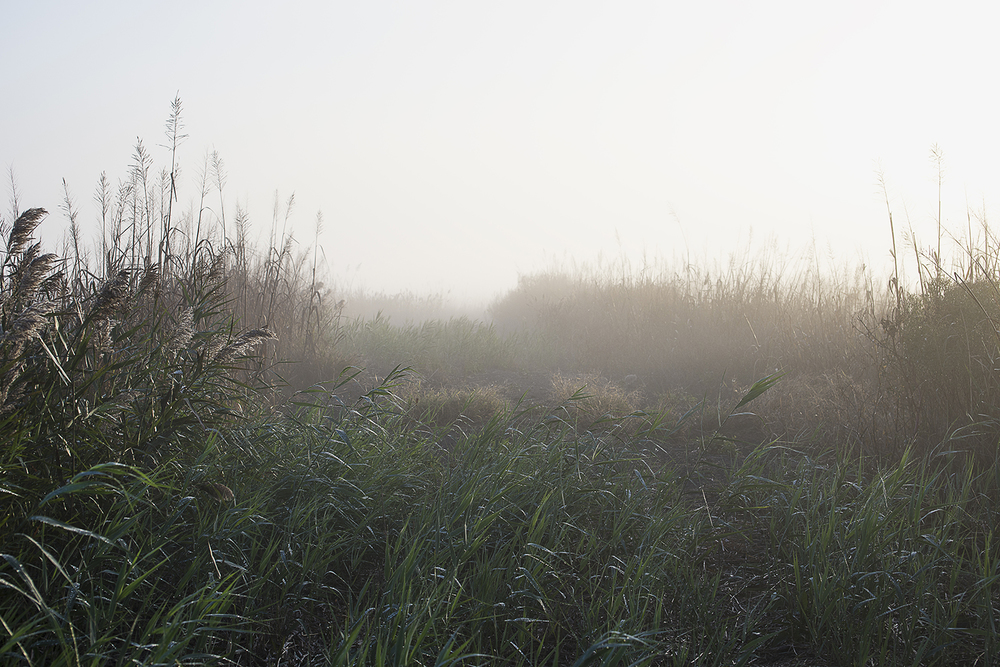 Rice Bank in Fog
