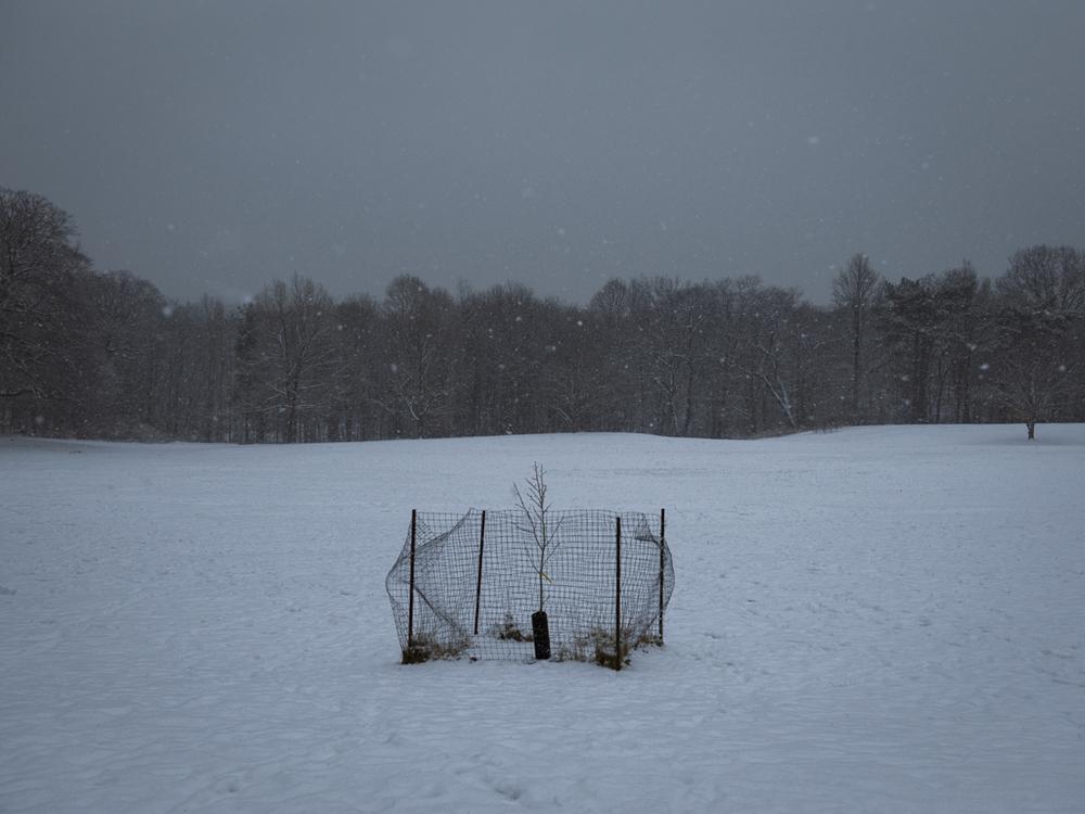 Brooklyn NY − Snow