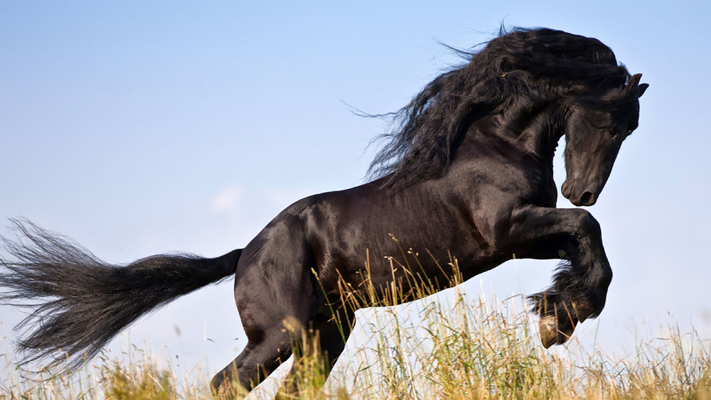 elevates_equine_2.jpg