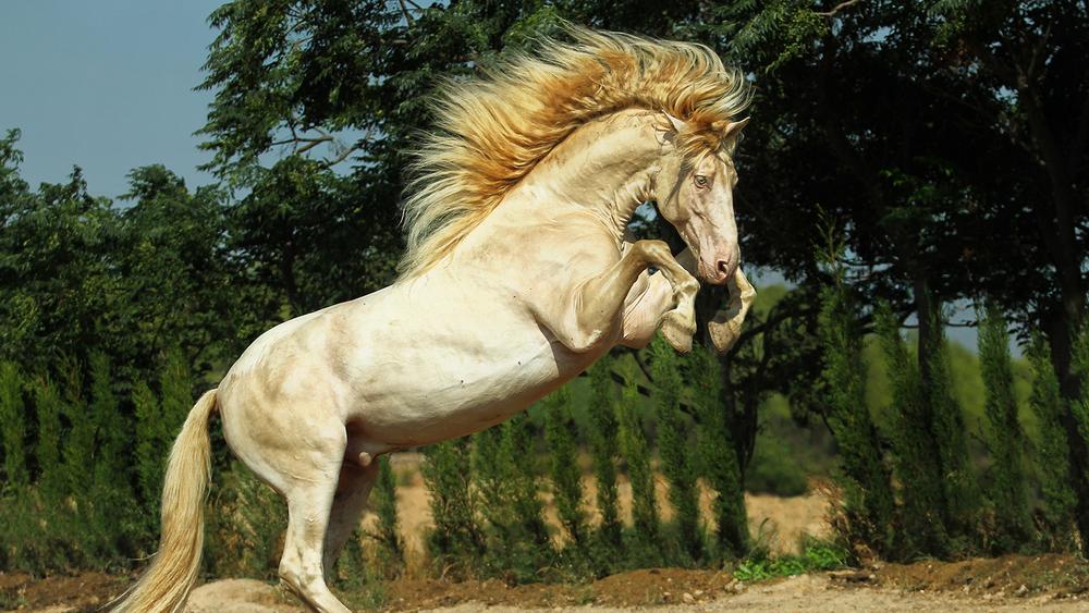 elevates_equine_3.jpg