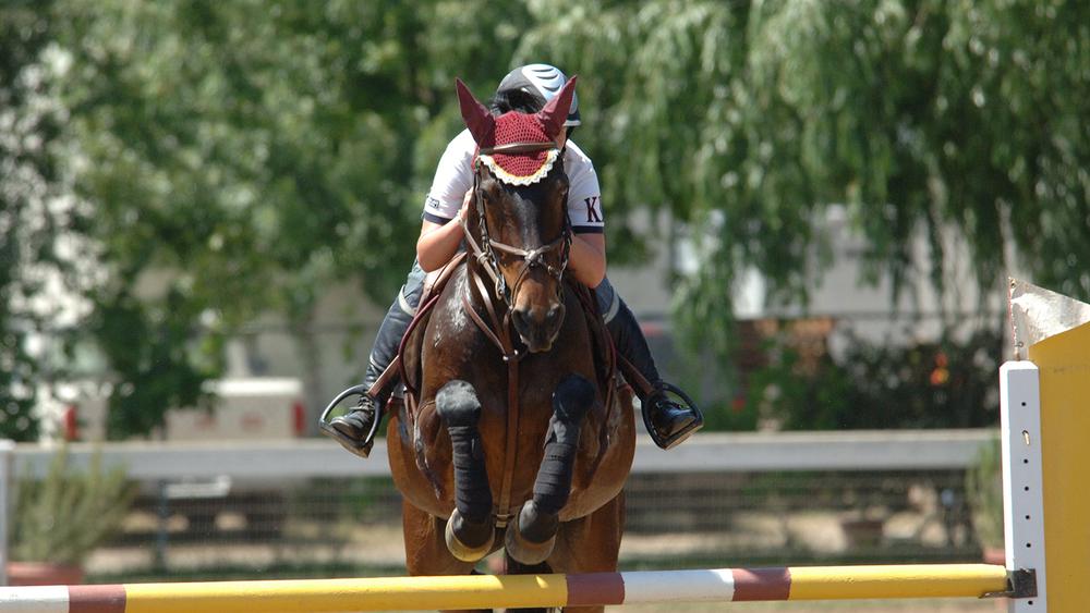 elevates_equine_4.jpg