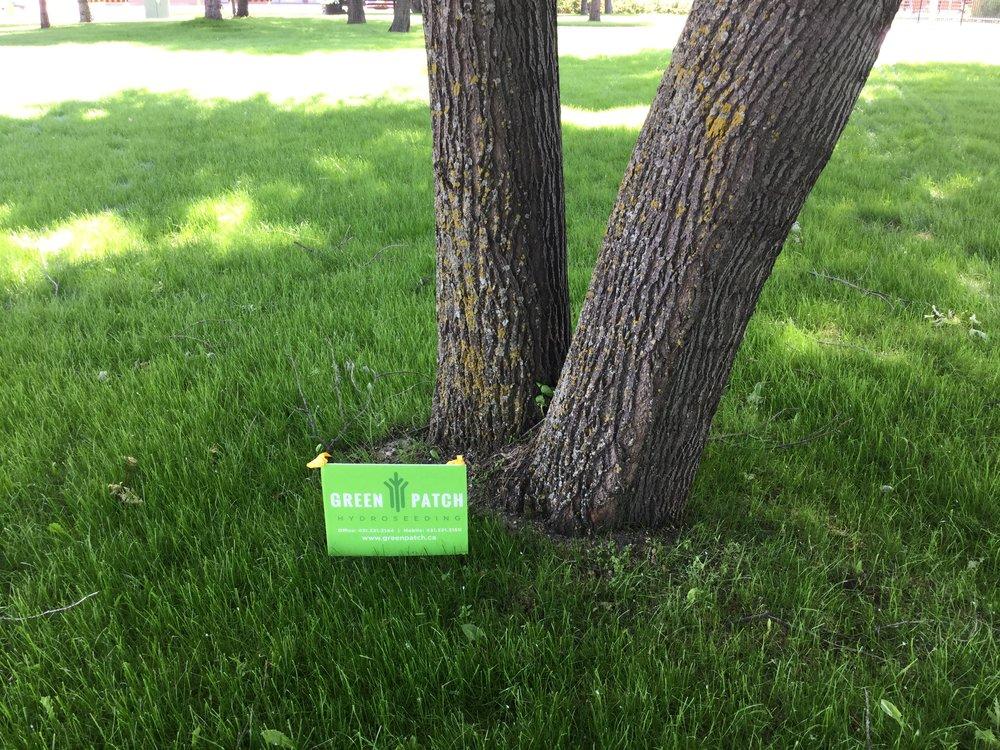 GreenPatch    Hydroseeding      -