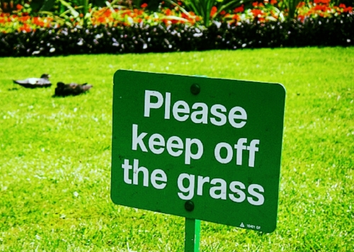 Only for watering purposes should you walk on the grass, until established