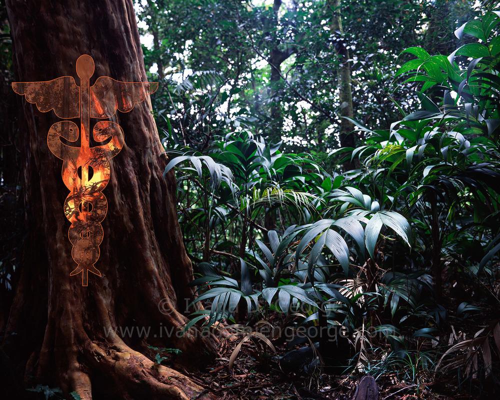 Nude Indian Medicinal Tree