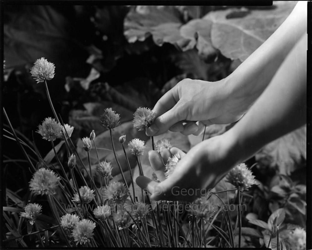 springgarden2015-035.jpg
