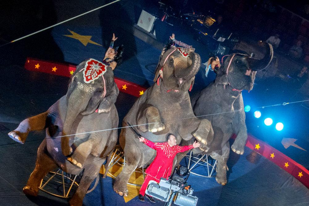 PHO_Tadmor_Acts_Elephants1769.jpg
