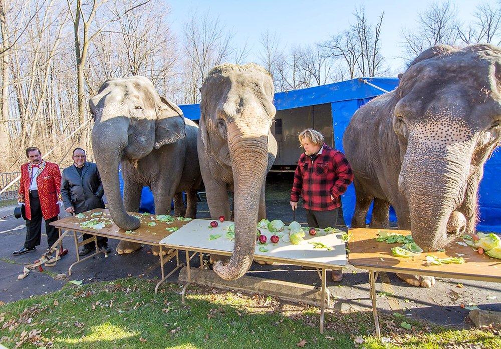 PHO_Tadmor_Acts_Elephants9389.jpg