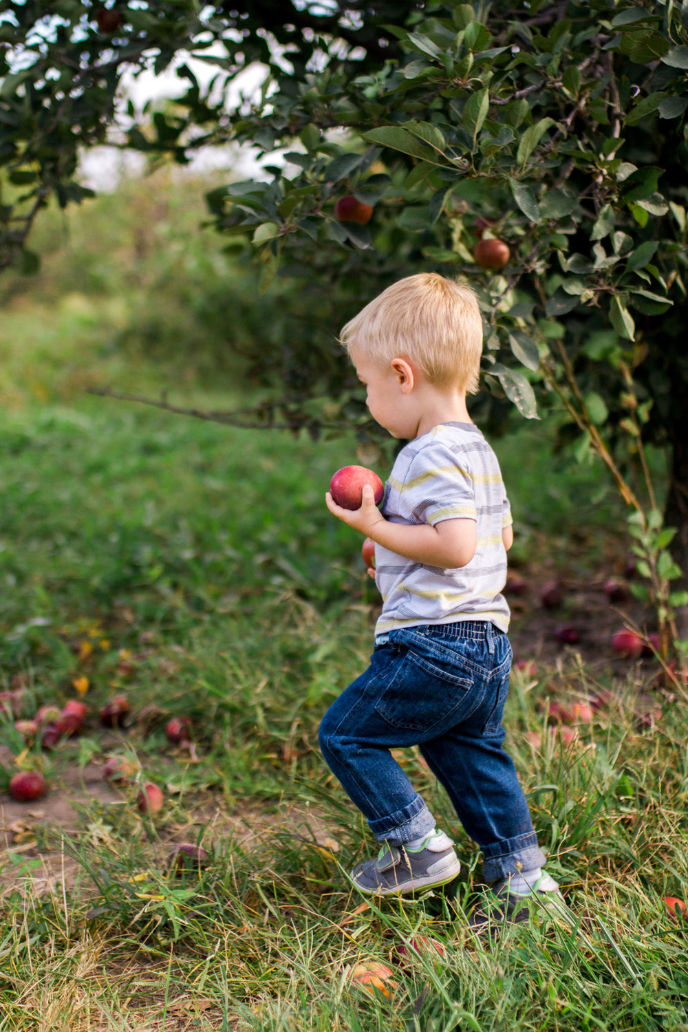 Rebecca Clair Photography, Kansas City lifestyle photographer, apple picking photo session, apple orchard photos, Kansas City family photographer, boy carrying apples
