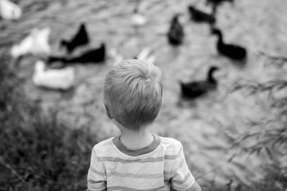 Rebecca Clair Photography, Kansas City lifestyle photographer, apple picking photo session, apple orchard photos, Kansas City family photographer, boy watching ducks, black and white photo