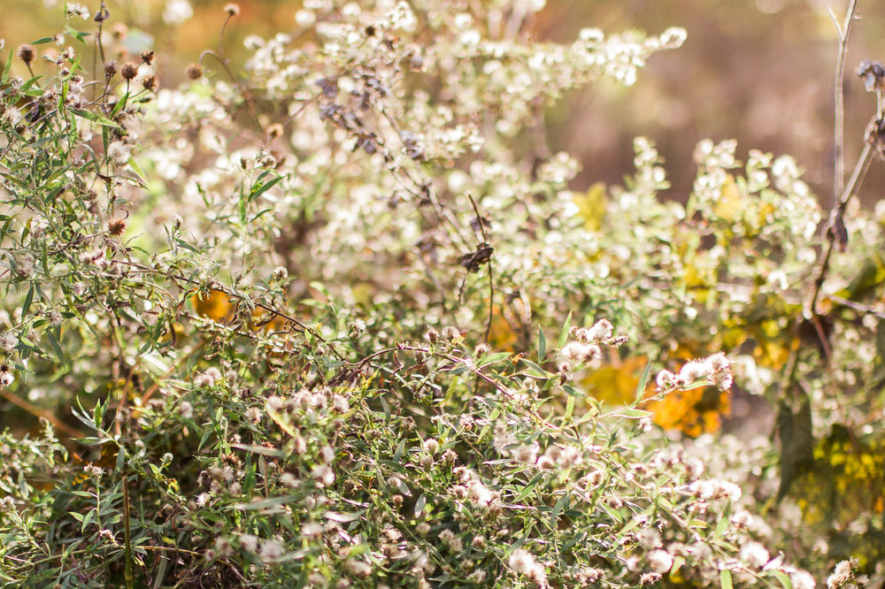 Autum folioge in the golden sunlight, Kansas City fall family photos