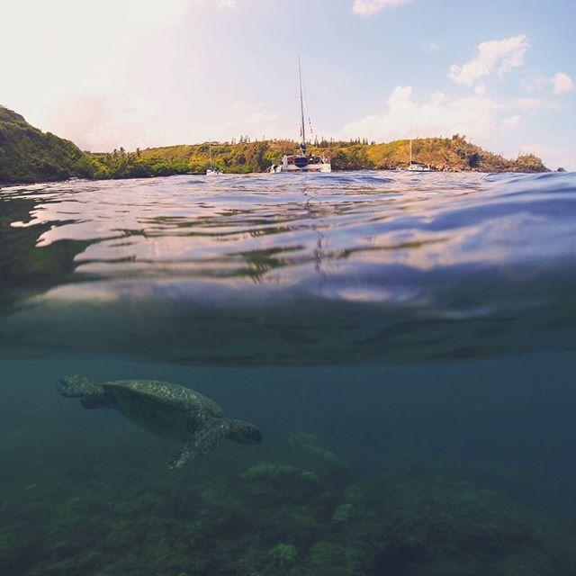 From last weeks snorkeling excursion.
