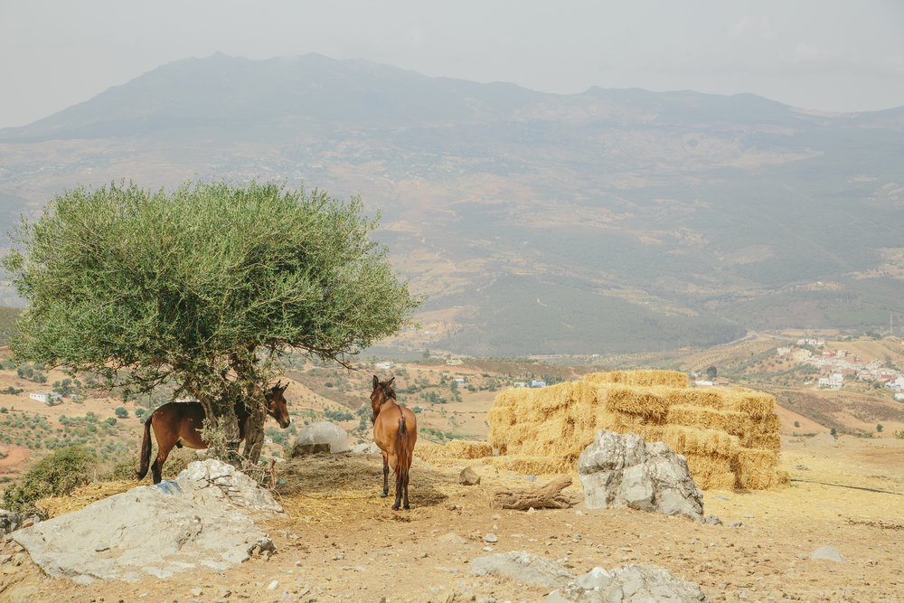 Morocco32.jpg