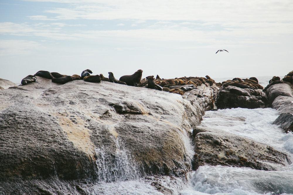 CapetownAdventureToPost-5.jpg