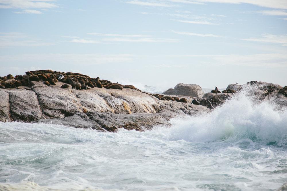 CapetownAdventureToPost-7.jpg