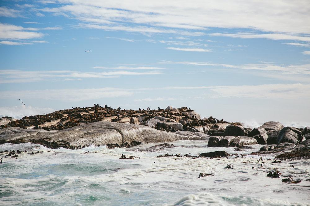 CapetownAdventureToPost-8.jpg