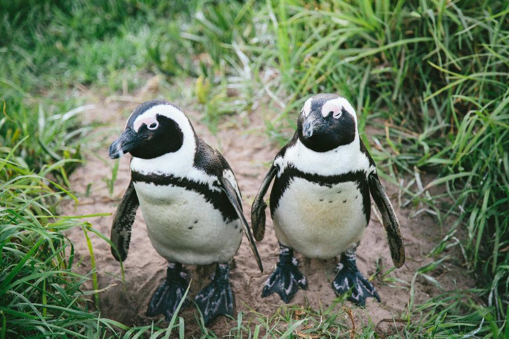 CapetownAdventureToPost-24.jpg