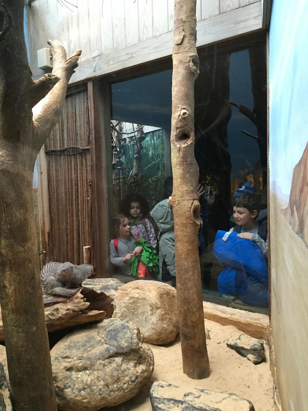 Zoo6.JPG