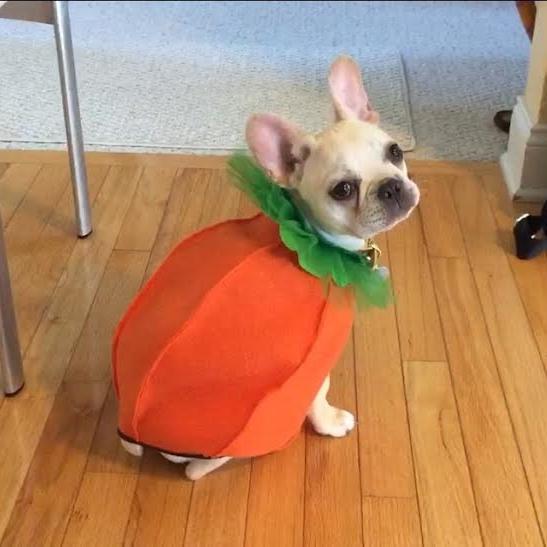coco_pumpkin.jpg