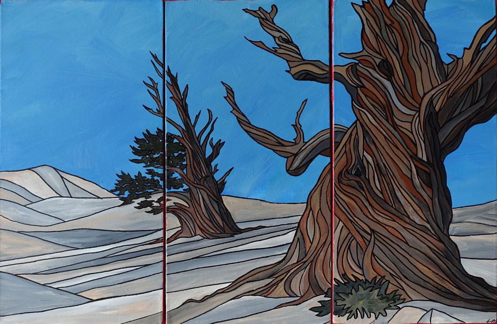 "Bristlecones, White Mountains.Acrylic triptych 30"" x 20"""