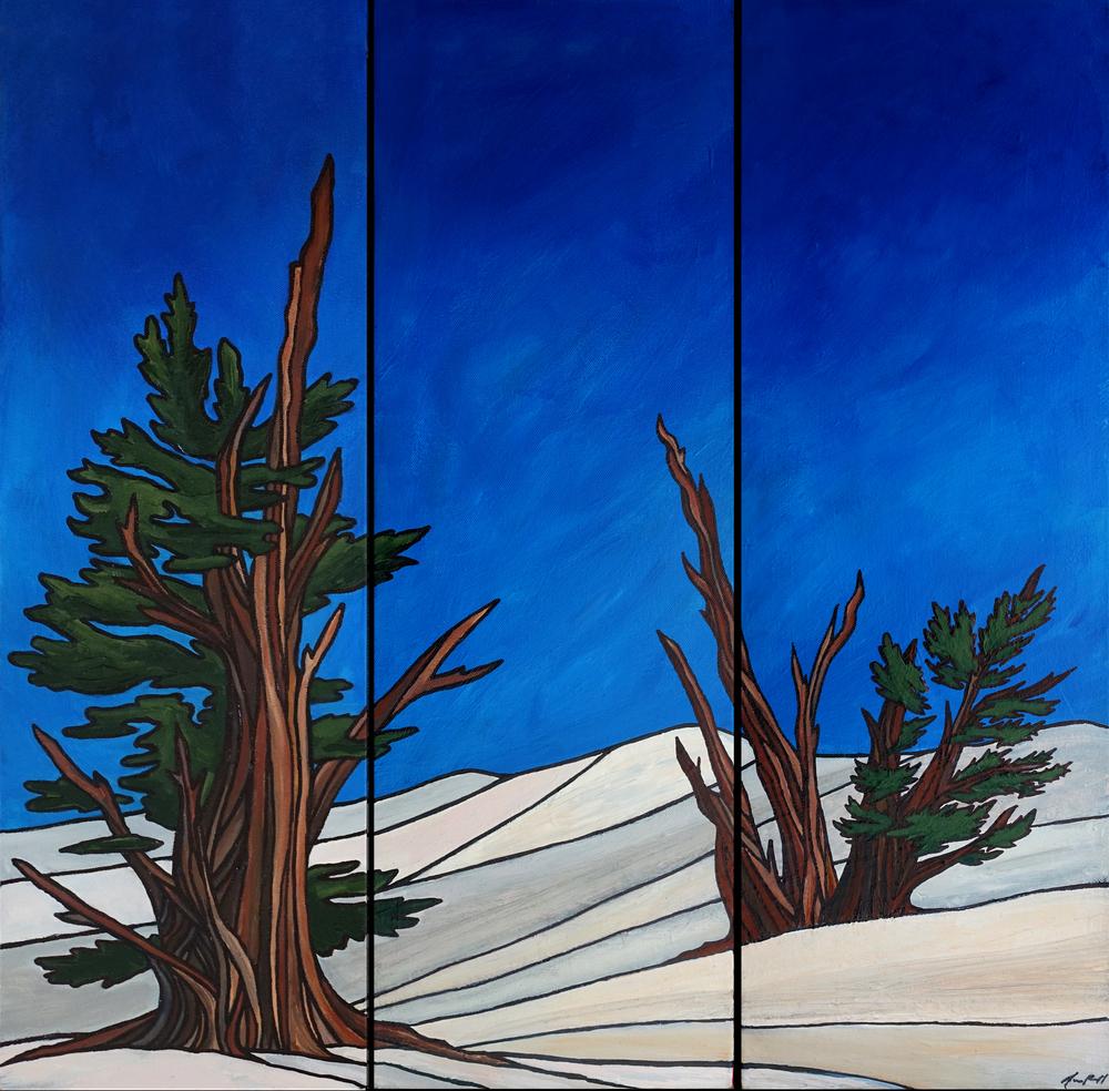 "Bristlecones II, White Mountains. Acrylic triptych 24""x 24"""