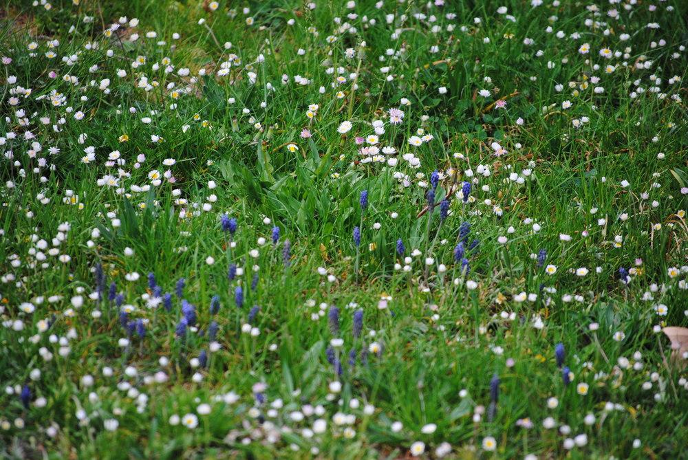area_wild flowers.jpg
