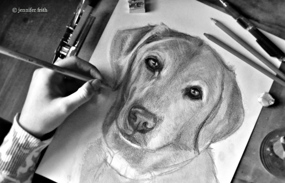 jennys-sketchbook-pencil-drawing-pet-portrait.jpg